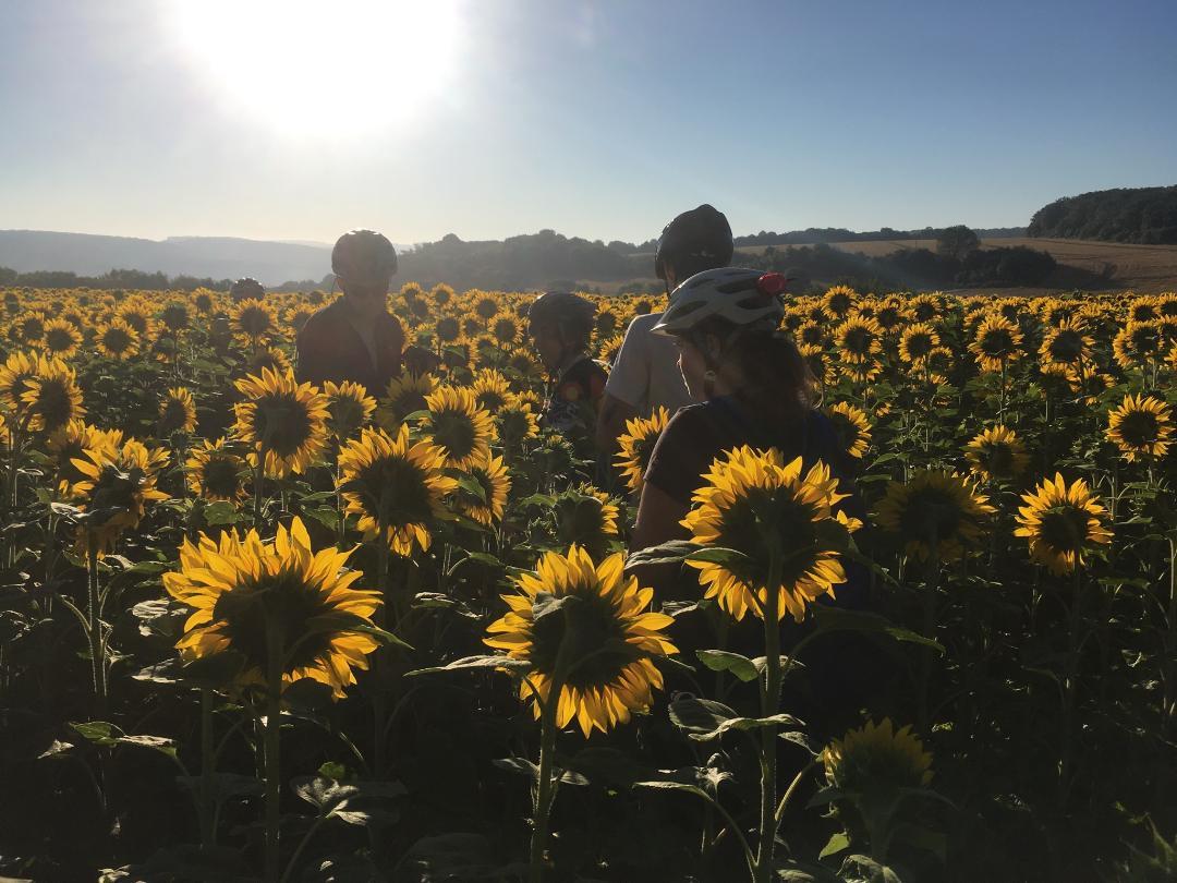 ECC and Sunflowers!